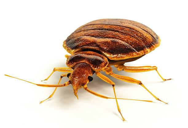 Bed Bug Control Alfa J Pest Control
